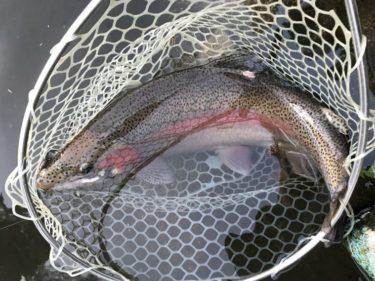 4月のサンペイ(三瓶)フィッシング釣行記②(福島県の管理釣り場)
