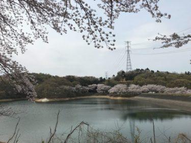 水遊び:ブラックバス✖群馬県 4月の竹沼貯水池