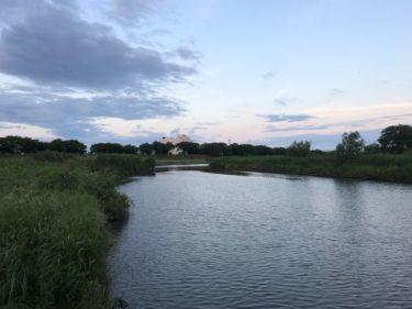 水遊び:ブラックバス✖茨城県 6月の霞ケ浦水系(土浦エリア)