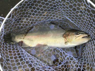 8月のおくとねフィッシングパーク釣行記(群馬県の管理釣り場)