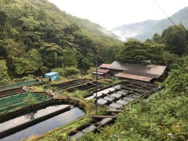 10月の日本イワナセンター釣行から大物を狙うおすすめルアーと攻略法(群馬県の管理釣り場)
