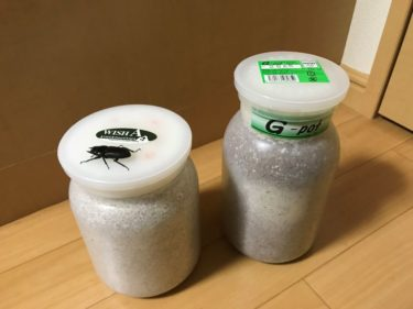 山遊び:トクノシマコクワと徳之島産スジブトヒラタの幼虫飼育(菌糸瓶交換)