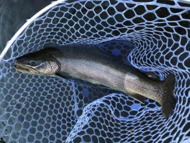 12月の日本イワナセンターでPEラインを使ったインプレ(群馬県の管理釣り場)