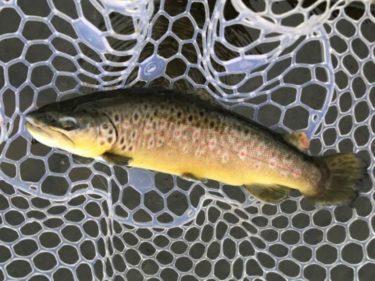 2020年2月の川場フィッシングプラザ釣行記(群馬県の管理釣り場)