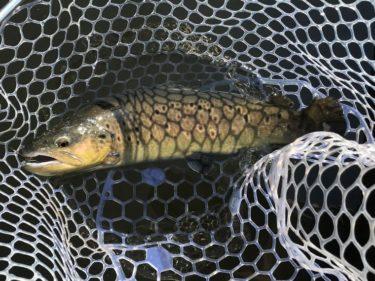2020年2月の宮城アングラーズビレッジ釣行記(群馬県の管理釣り場)